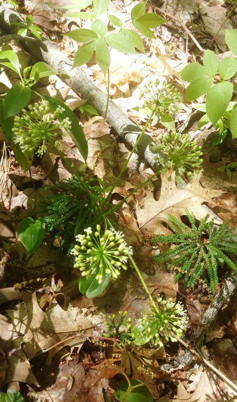 Name:  Flora.jpg Views: 181 Size:  99.8 KB