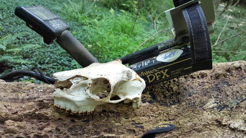 Name:  July 27th  skull.jpg Views: 81 Size:  82.7 KB
