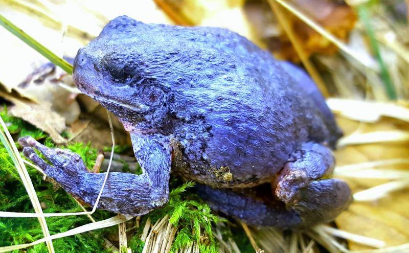 Name:  purple toad .jpg Views: 54 Size:  84.4 KB